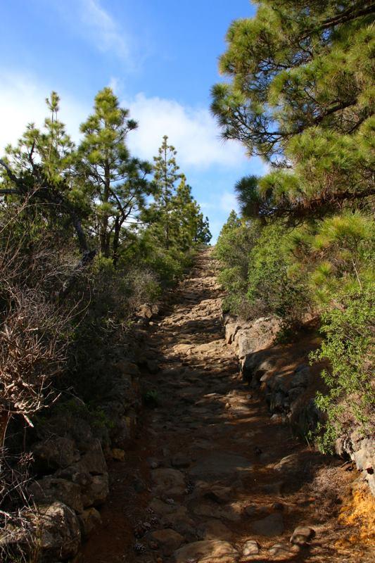 palma downhill