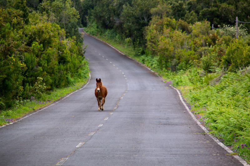 palma horse