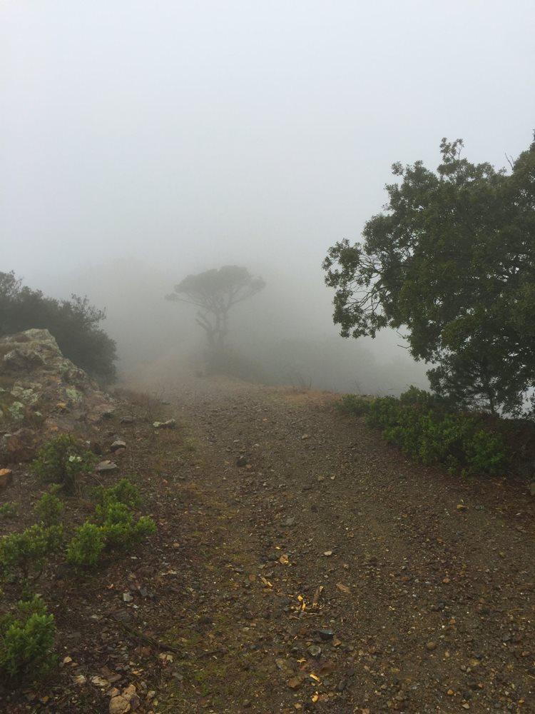early fog.jpg